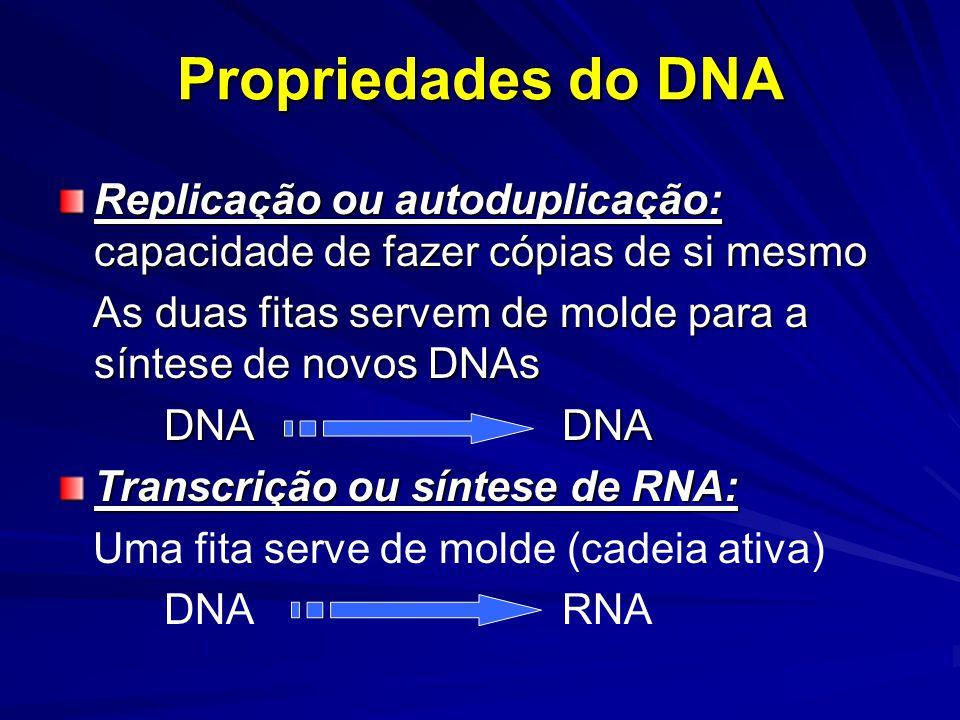 Propriedades do DNA Replicação ou autoduplicação: capacidade de fazer cópias de si mesmo. As duas fitas servem de molde para a síntese de novos DNAs.