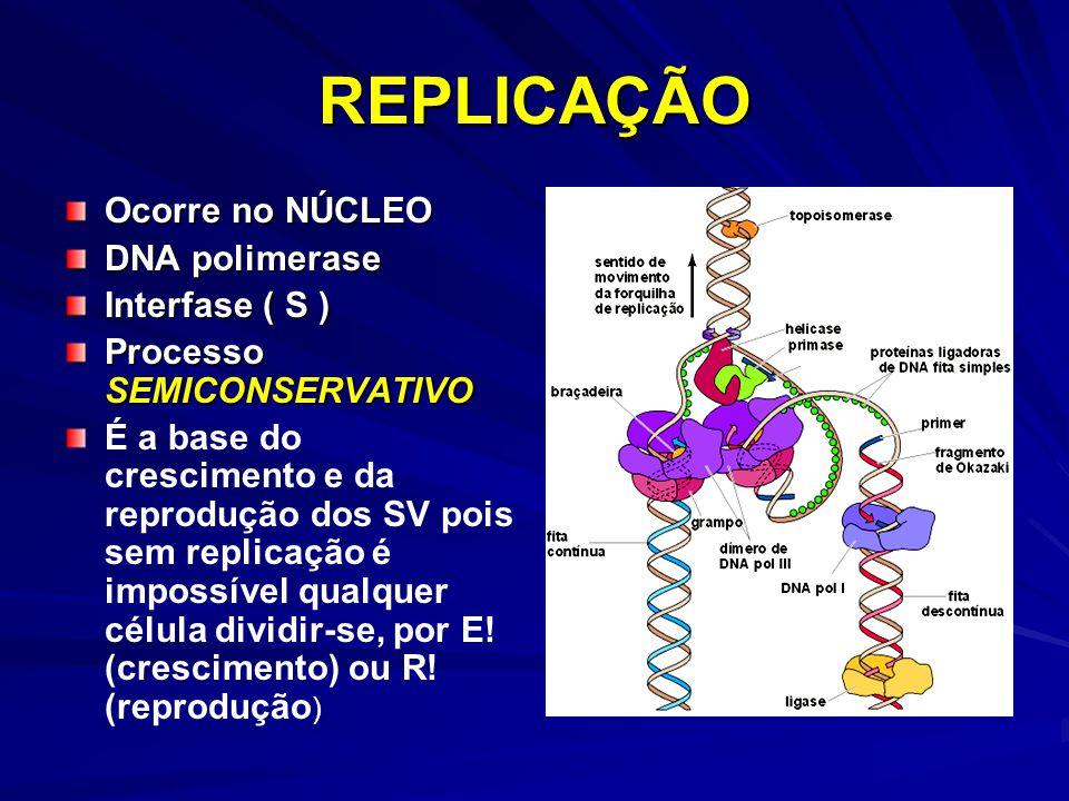 REPLICAÇÃO Ocorre no NÚCLEO DNA polimerase Interfase ( S )