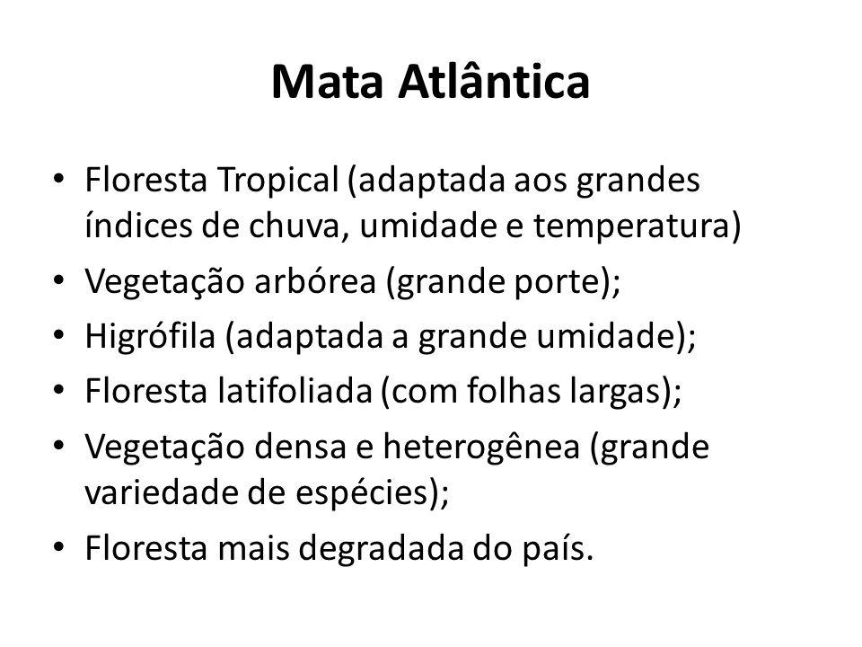 Mata Atlântica Floresta Tropical (adaptada aos grandes índices de chuva, umidade e temperatura) Vegetação arbórea (grande porte);
