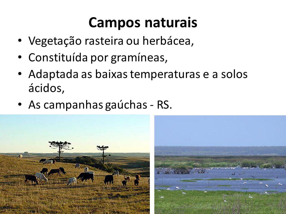 Campos naturais Vegetação rasteira ou herbácea,