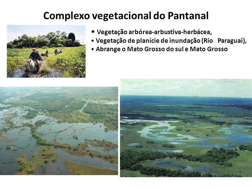 Complexo vegetacional do Pantanal