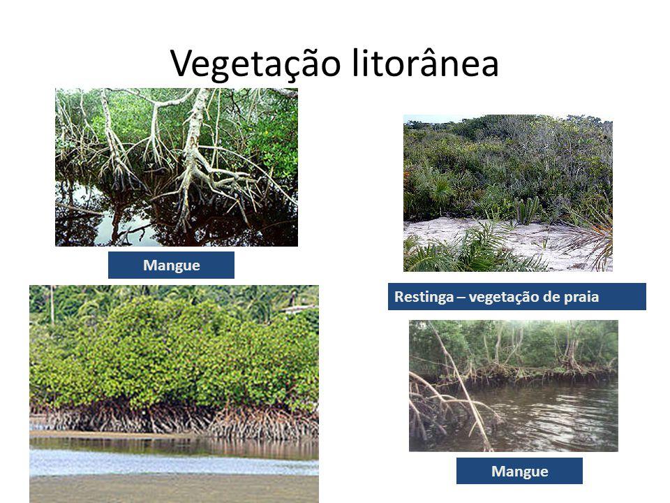 Vegetação litorânea Mangue Restinga – vegetação de praia Mangue