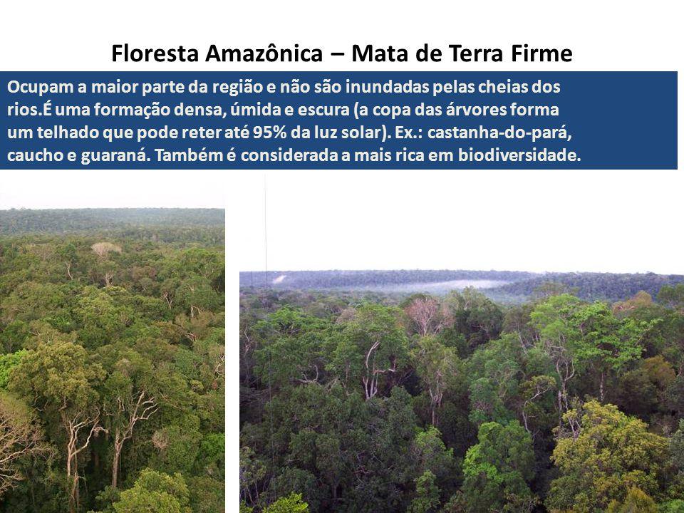 Floresta Amazônica – Mata de Terra Firme