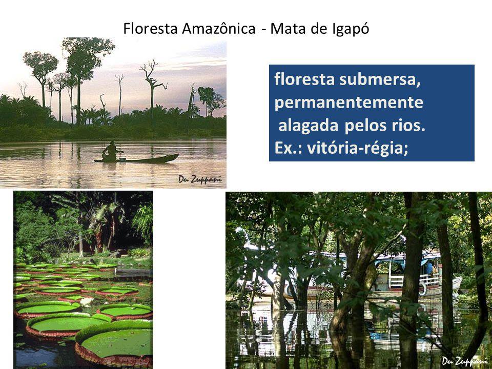 Floresta Amazônica - Mata de Igapó