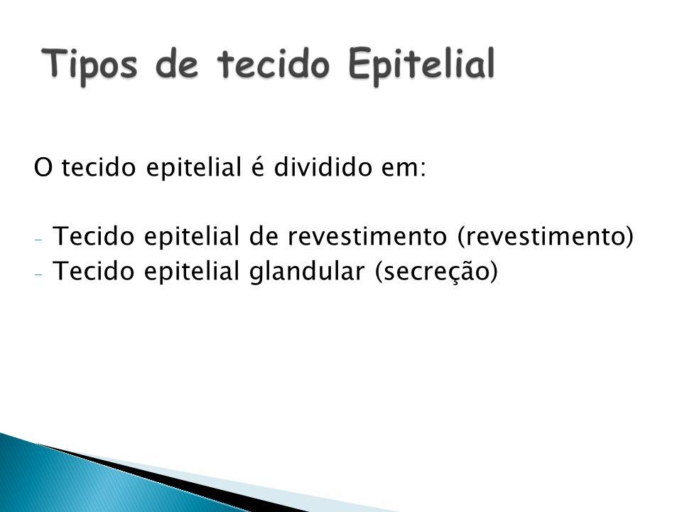 O tecido epitelial é dividido em: