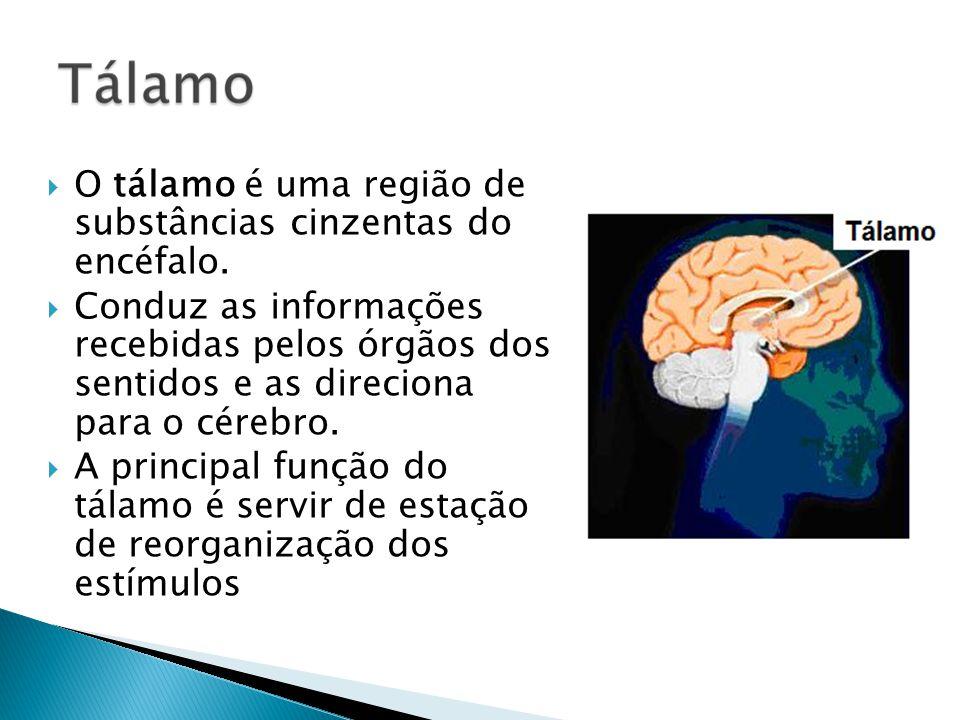 O tálamo é uma região de substâncias cinzentas do encéfalo.