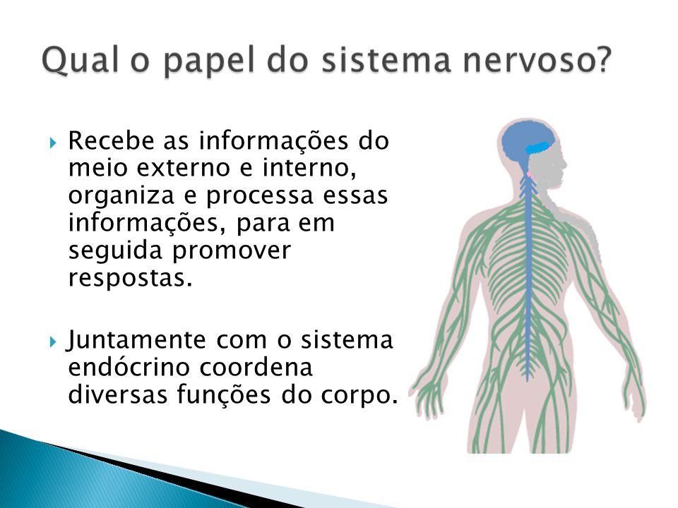 Recebe as informações do meio externo e interno, organiza e processa essas informações, para em seguida promover respostas.
