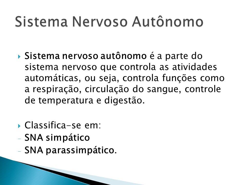 Sistema nervoso autônomo é a parte do sistema nervoso que controla as atividades automáticas, ou seja, controla funções como a respiração, circulação do sangue, controle de temperatura e digestão.