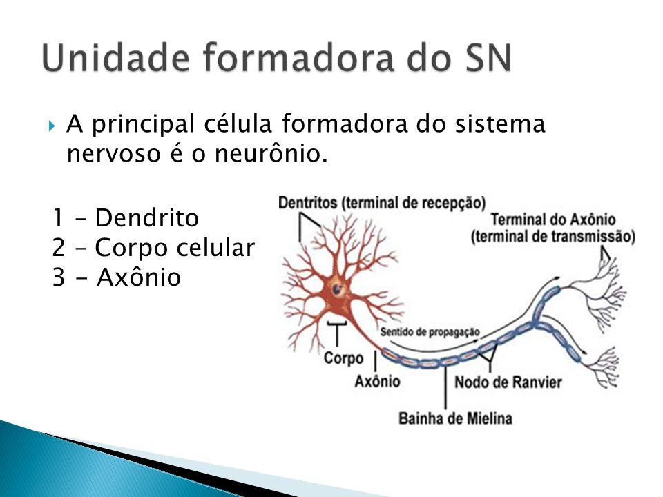 A principal célula formadora do sistema nervoso é o neurônio.