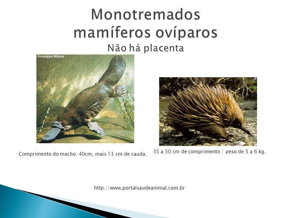 Monotremados mamíferos ovíparos Não há placenta