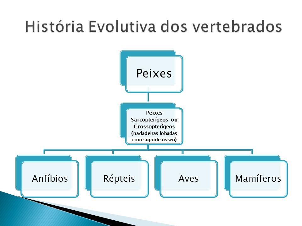 História Evolutiva dos vertebrados