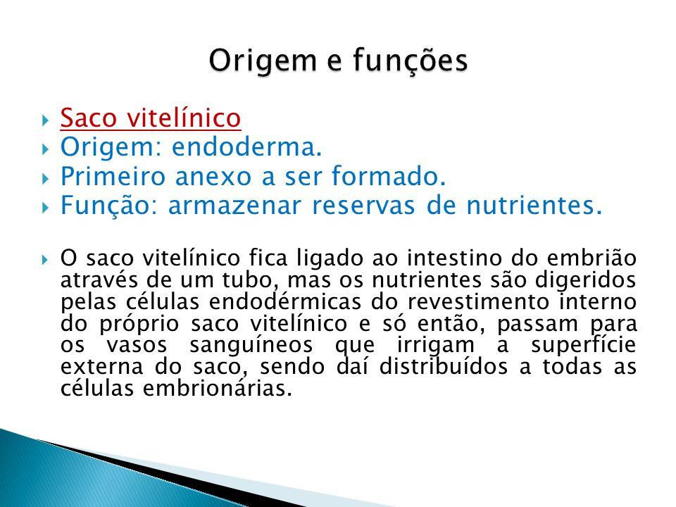 Origem e funções Saco vitelínico Origem: endoderma.