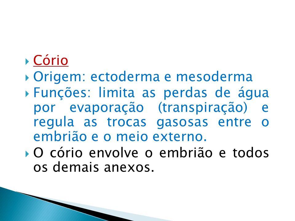 Cório Origem: ectoderma e mesoderma.