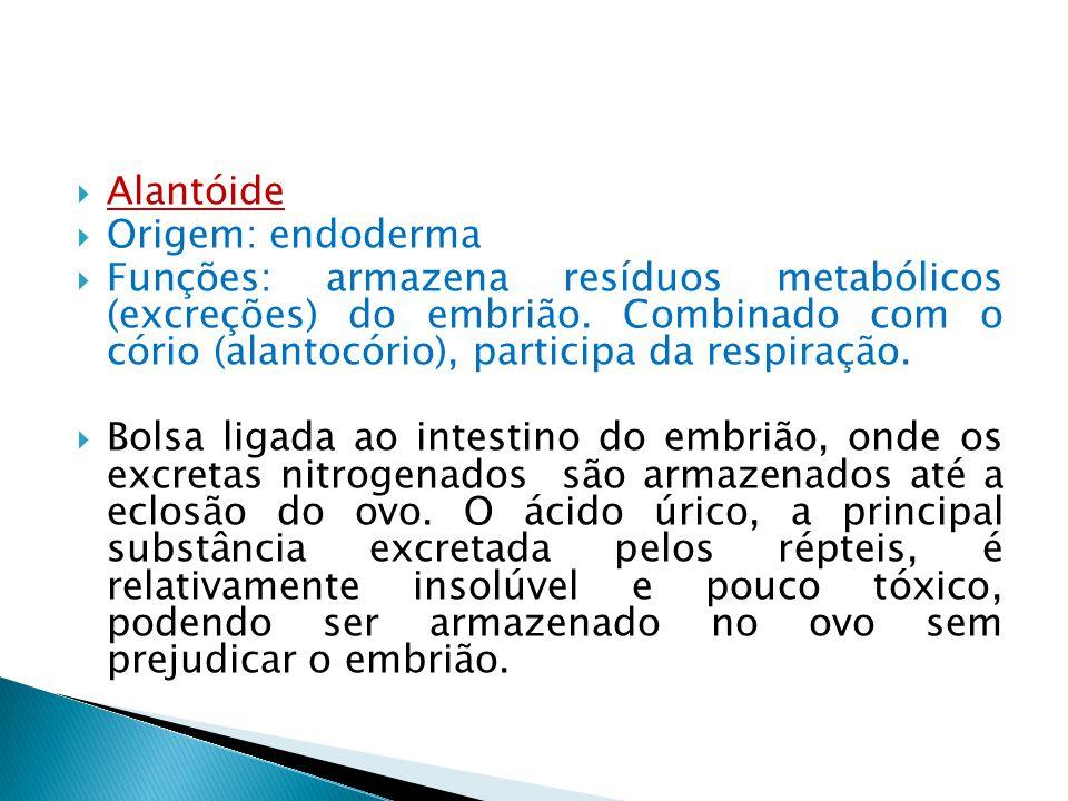 Alantóide Origem: endoderma.