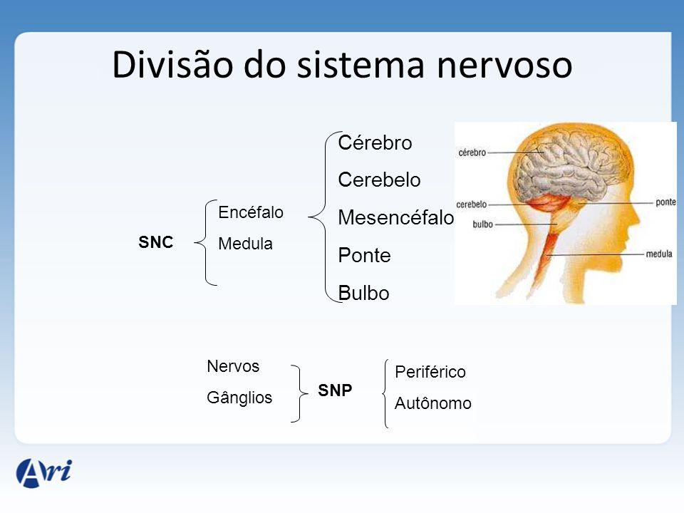 Divisão do sistema nervoso