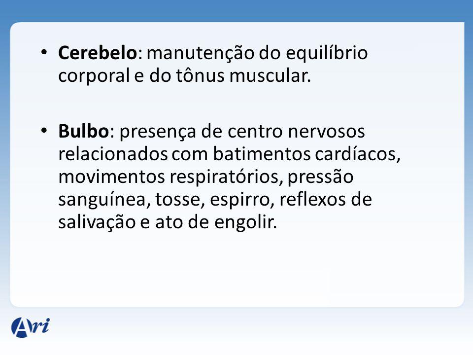 Cerebelo: manutenção do equilíbrio corporal e do tônus muscular.