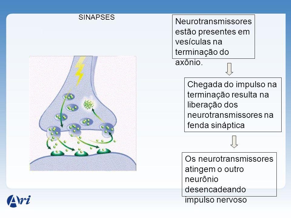 SINAPSES Neurotransmissores estão presentes em vesículas na terminação do axônio.
