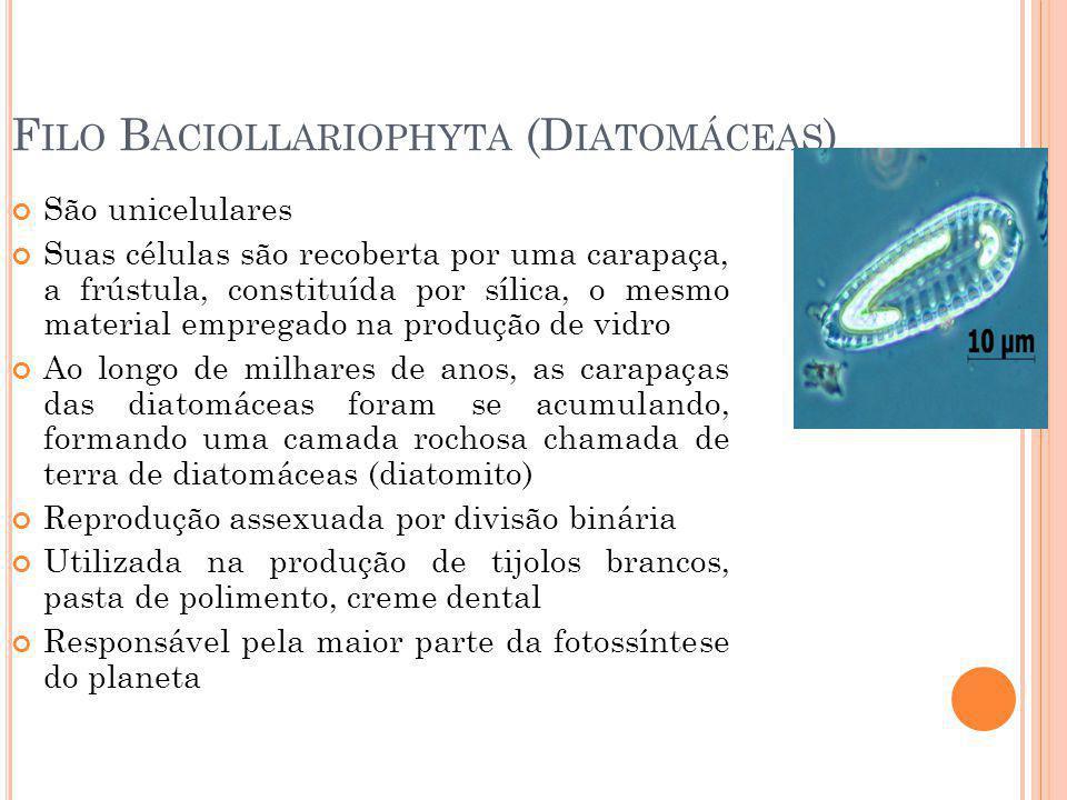 Filo Baciollariophyta (Diatomáceas)