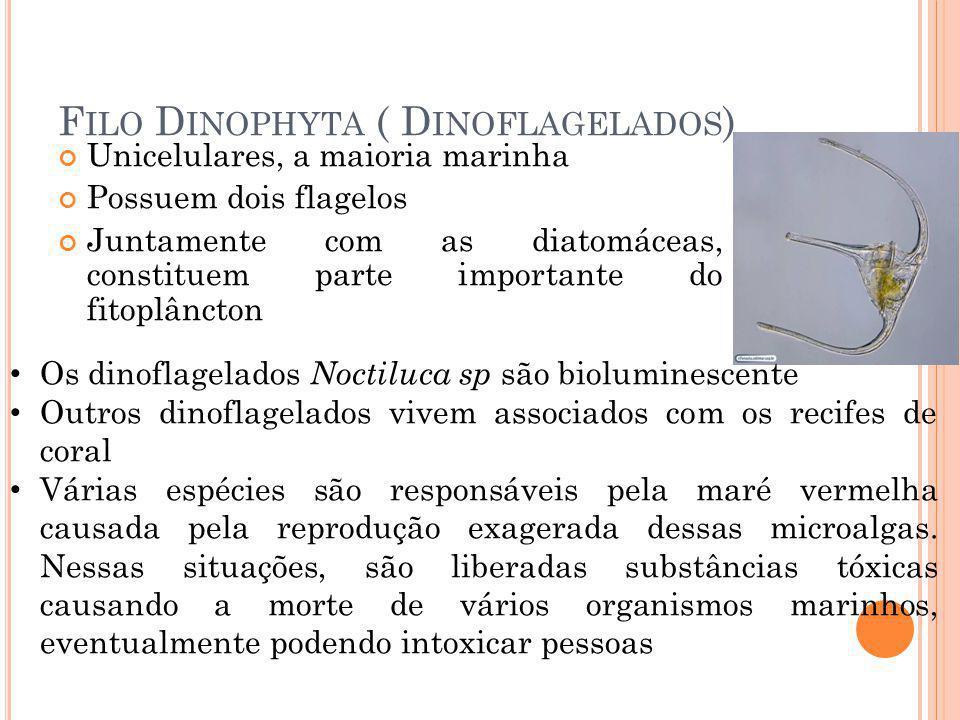 Filo Dinophyta ( Dinoflagelados)