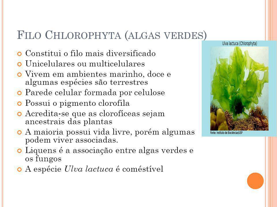 Filo Chlorophyta (algas verdes)