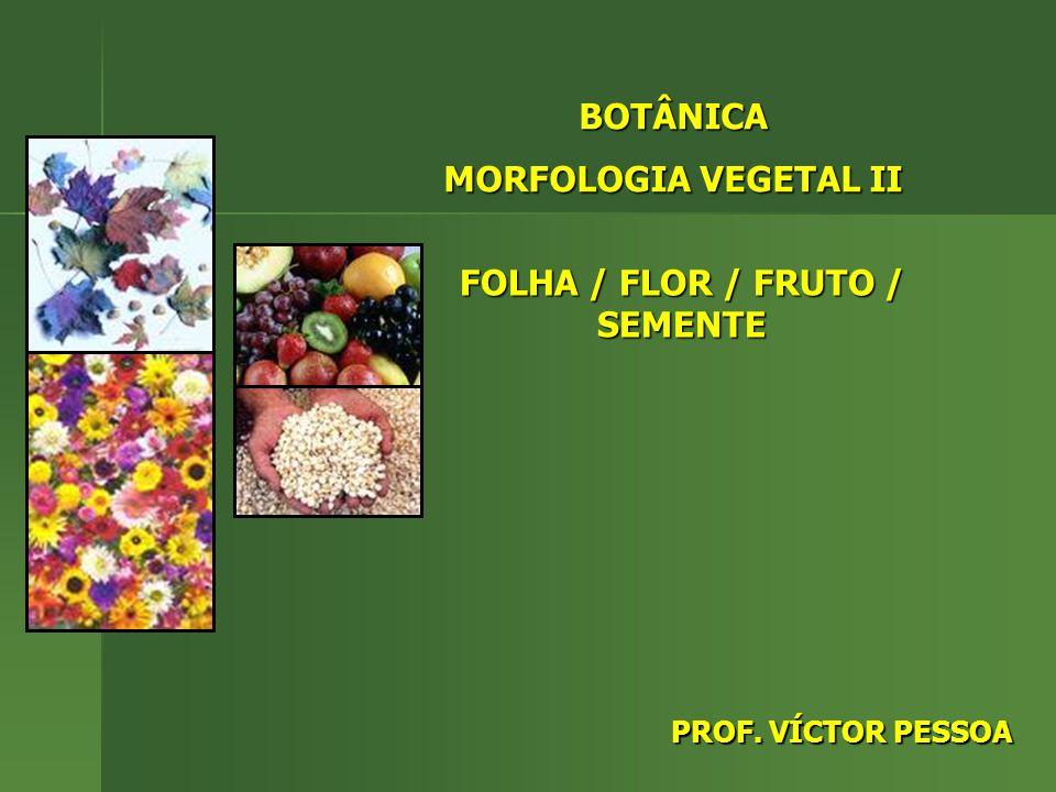 FOLHA / FLOR / FRUTO / SEMENTE