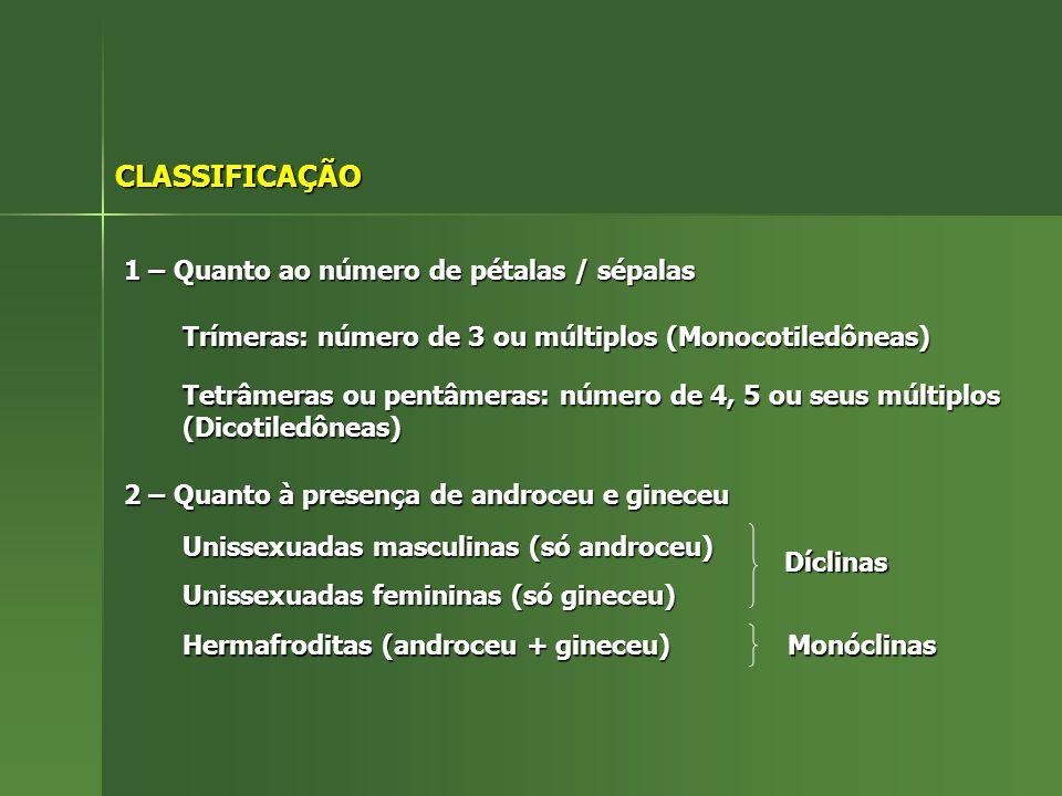 CLASSIFICAÇÃO 1 – Quanto ao número de pétalas / sépalas
