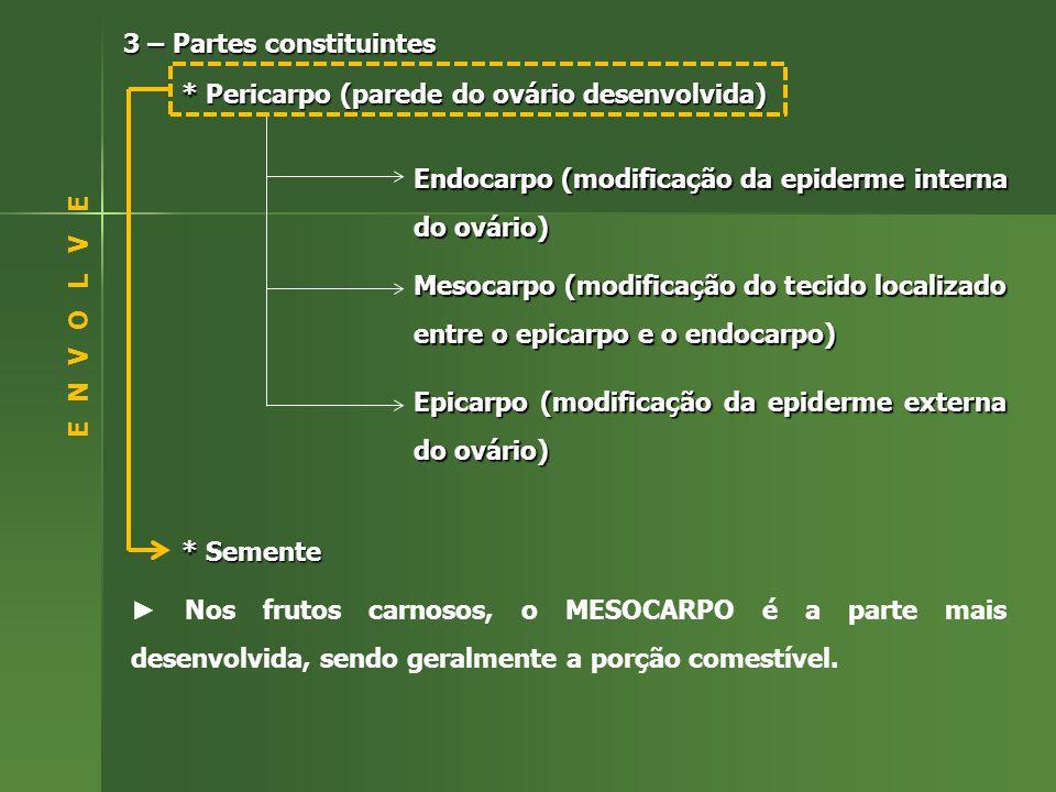 3 – Partes constituintes