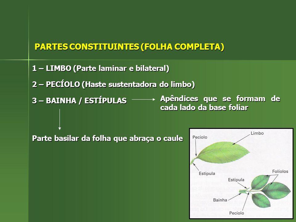 PARTES CONSTITUINTES (FOLHA COMPLETA)