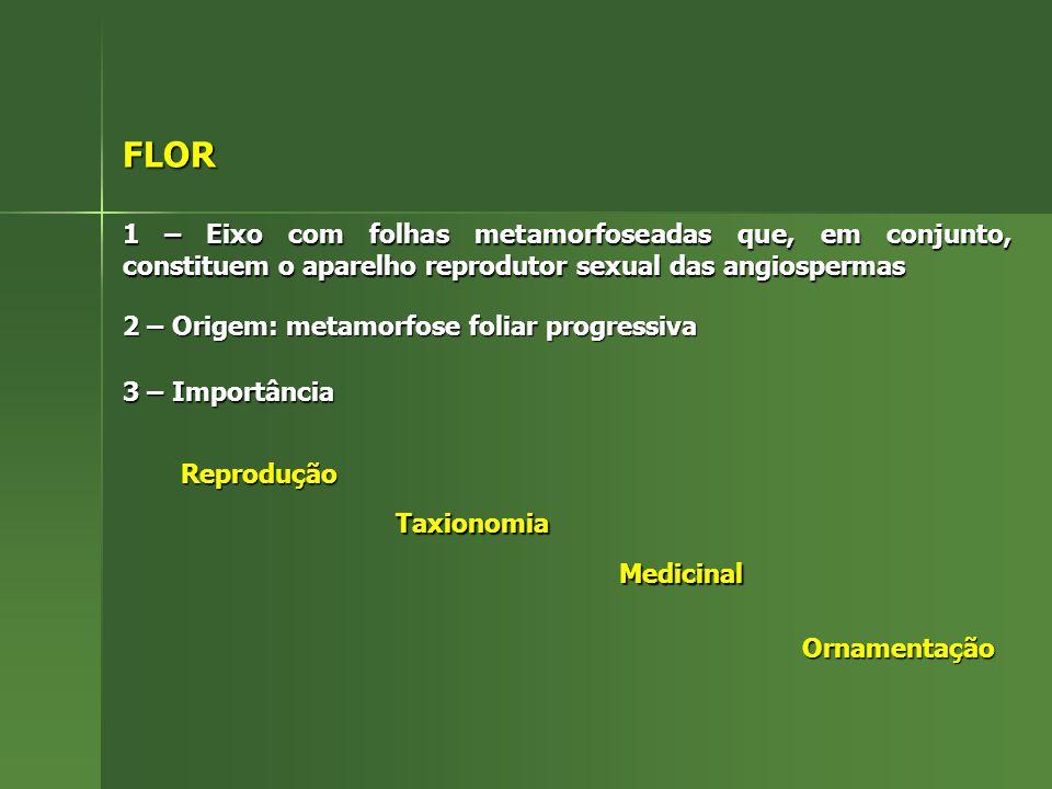 FLOR 1 – Eixo com folhas metamorfoseadas que, em conjunto, constituem o aparelho reprodutor sexual das angiospermas.