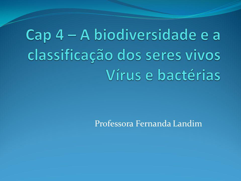 Professora Fernanda Landim