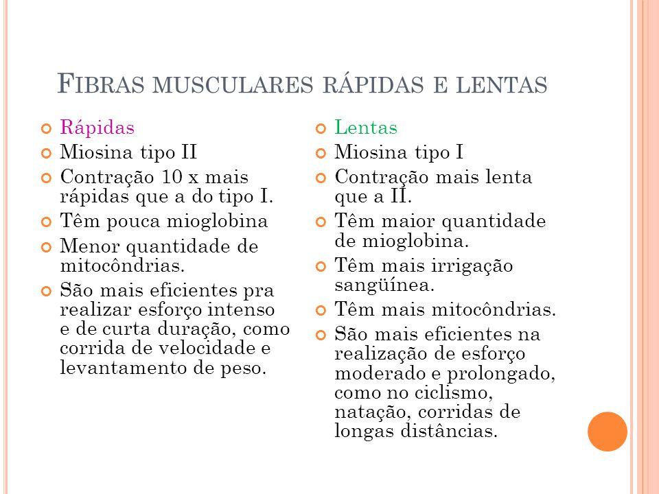 Fibras musculares rápidas e lentas