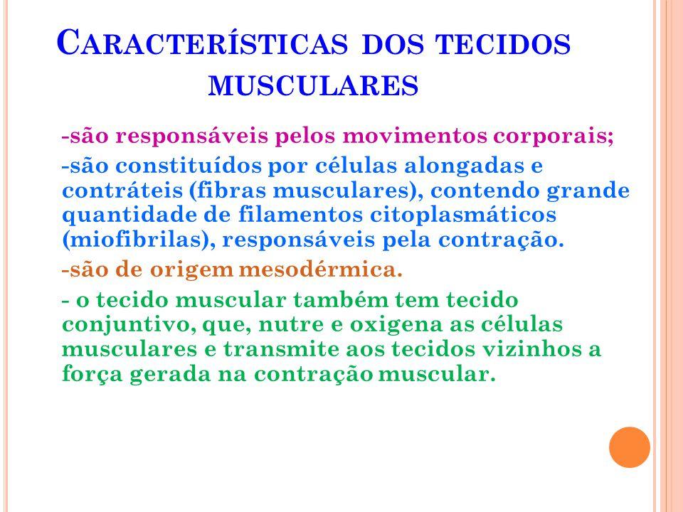 Características dos tecidos musculares