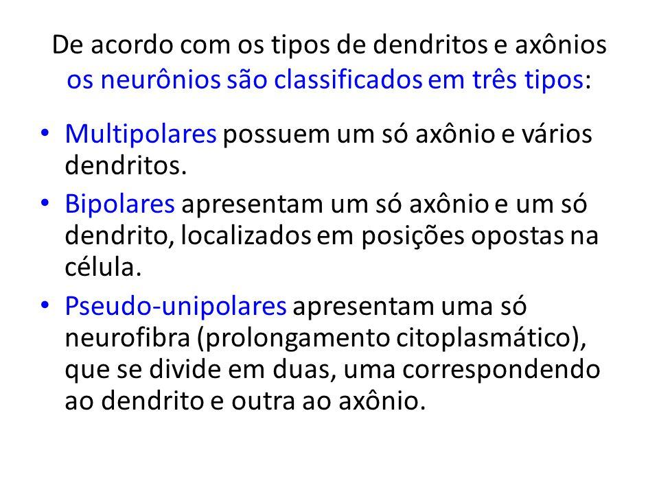 De acordo com os tipos de dendritos e axônios os neurônios são classificados em três tipos: