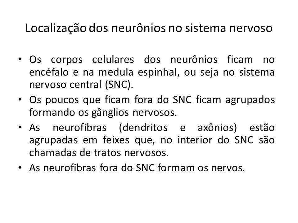 Localização dos neurônios no sistema nervoso