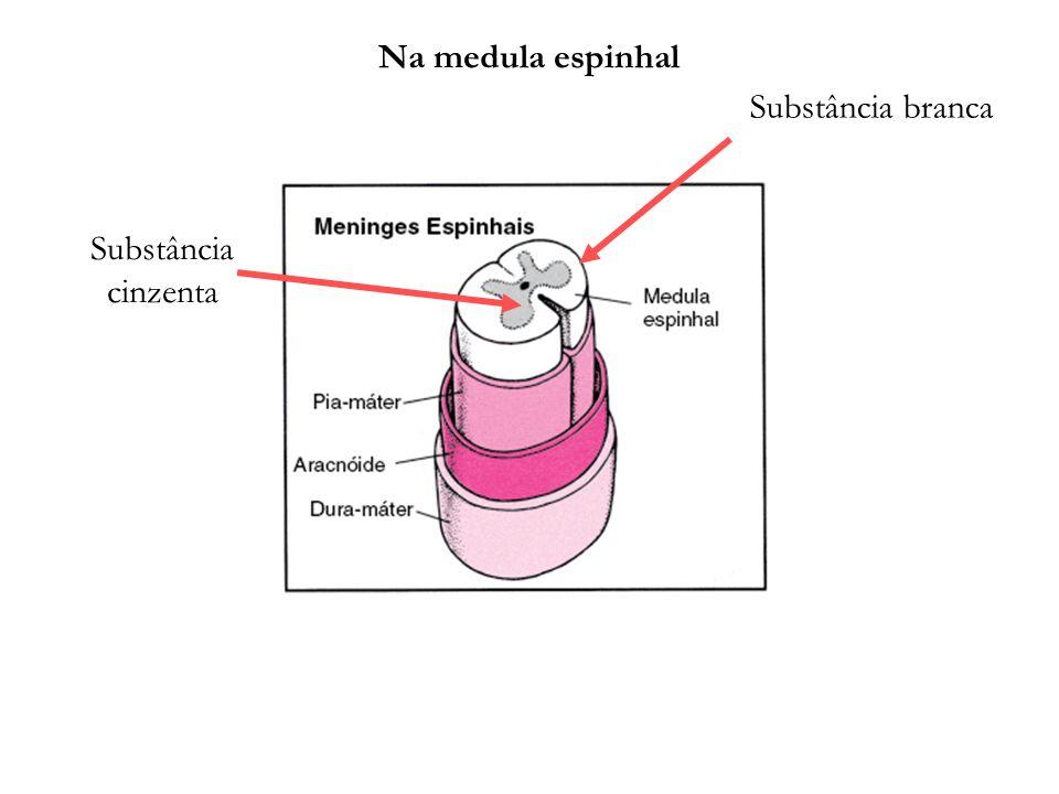 Na medula espinhal Substância branca Substância cinzenta