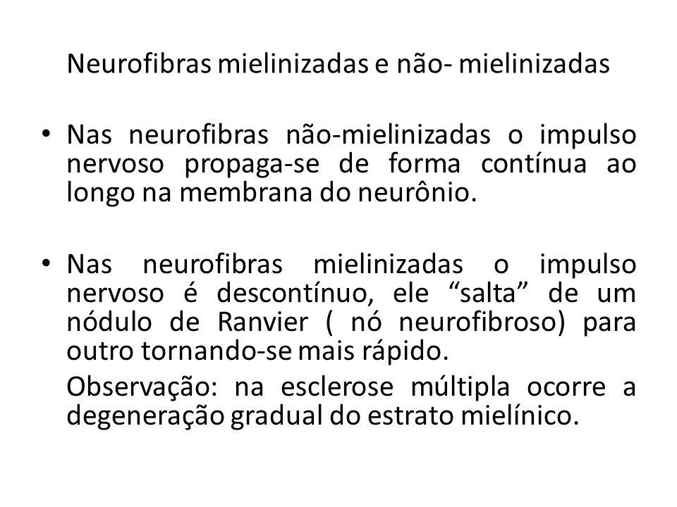 Neurofibras mielinizadas e não- mielinizadas