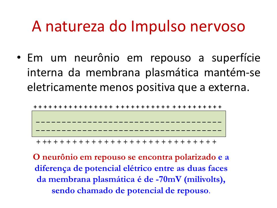 A natureza do Impulso nervoso