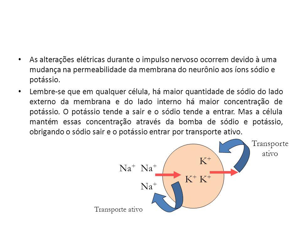 As alterações elétricas durante o impulso nervoso ocorrem devido à uma mudança na permeabilidade da membrana do neurônio aos íons sódio e potássio.
