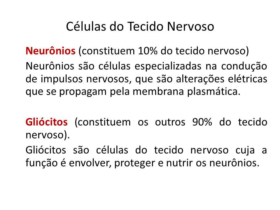 Células do Tecido Nervoso