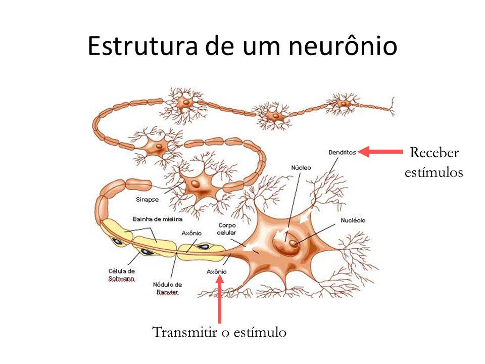 Estrutura de um neurônio