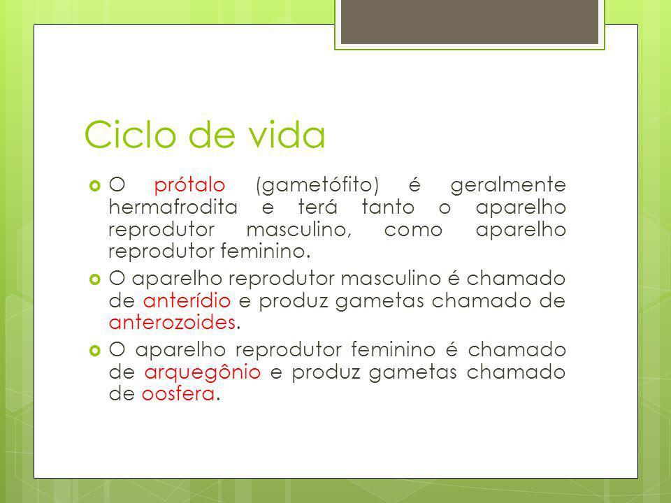 Ciclo de vida O prótalo (gametófito) é geralmente hermafrodita e terá tanto o aparelho reprodutor masculino, como aparelho reprodutor feminino.