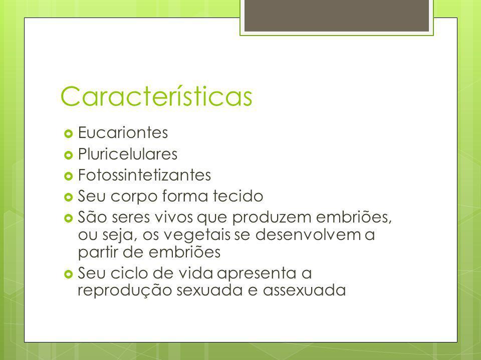 Características Eucariontes Pluricelulares Fotossintetizantes