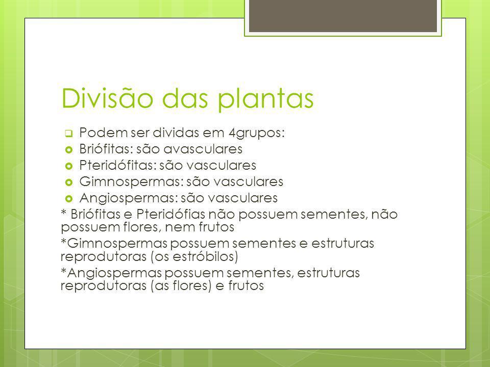 Divisão das plantas Podem ser dividas em 4grupos: