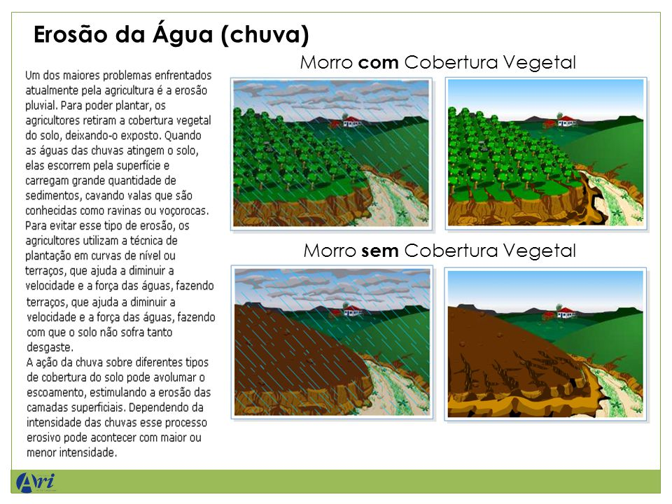 Erosão da Água (chuva) Morro com Cobertura Vegetal