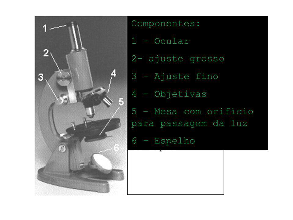 Componentes: 1 – Ocular. 2- ajuste grosso. 3 – Ajuste fino. 4 – Objetivas. 5 – Mesa com orifício para passagem da luz.
