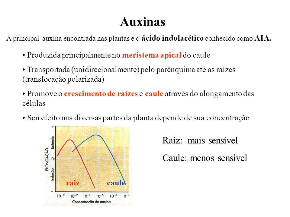 Auxinas Raiz: mais sensível Caule: menos sensível