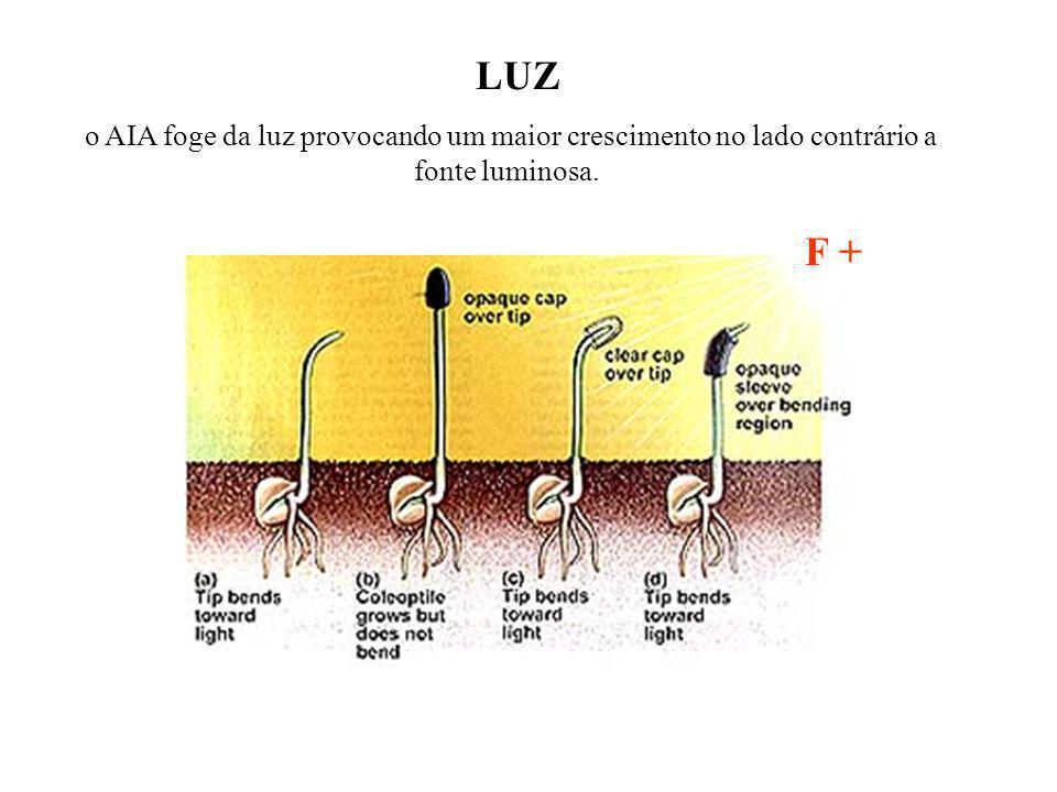 LUZ o AIA foge da luz provocando um maior crescimento no lado contrário a fonte luminosa. F +