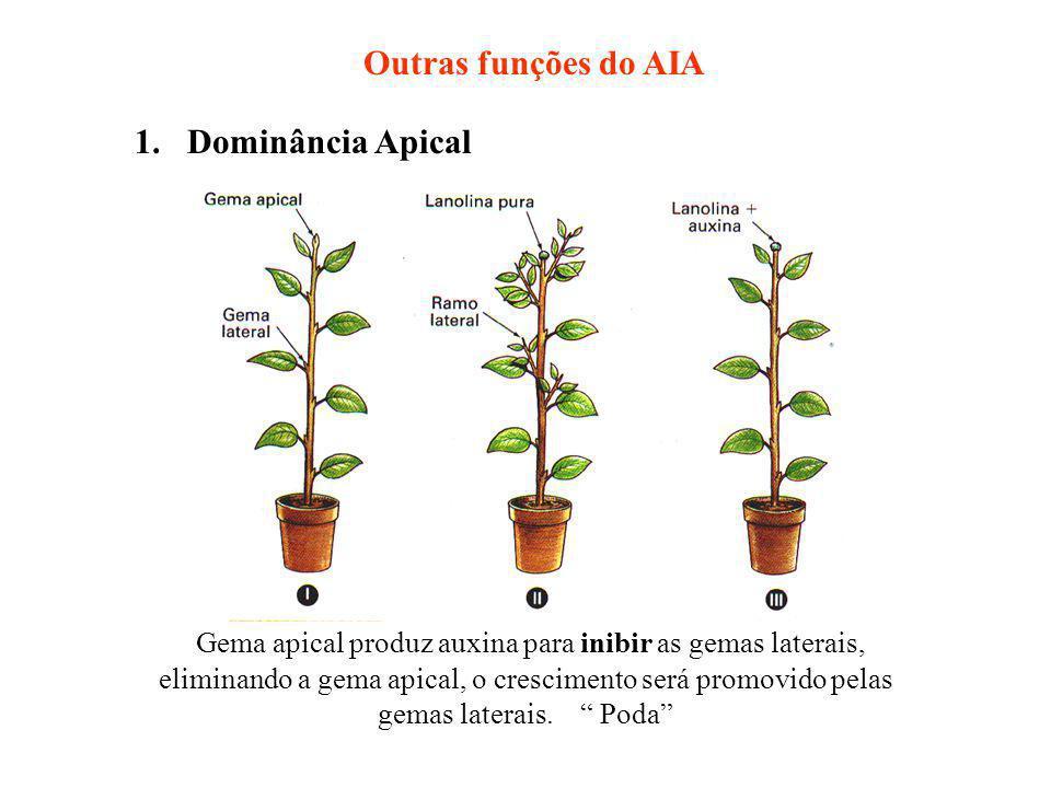 Outras funções do AIA 1. Dominância Apical.