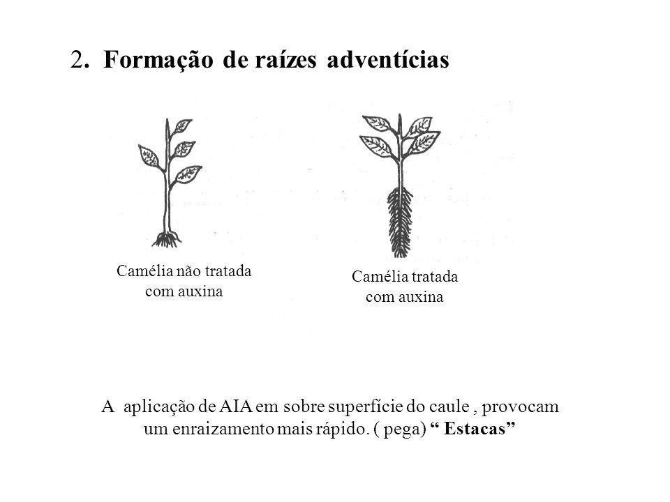 2. Formação de raízes adventícias