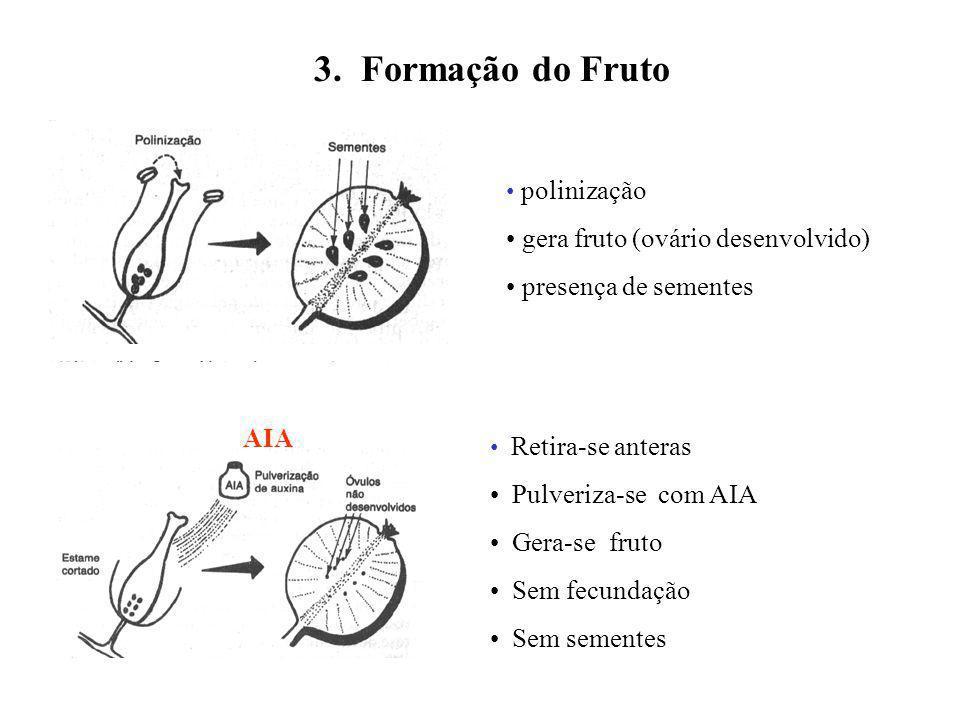 3. Formação do Fruto gera fruto (ovário desenvolvido)